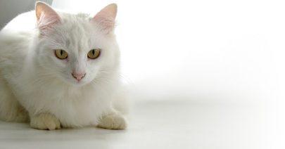 cat-1020927_640